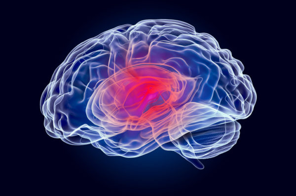 A rendering of the human brain